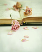 Dry roses and old book. Toned image — Стоковое фото