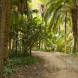 Stock Photo: Panoramic photo of palm trees in the city Park Maria Luisa. The capital city Sevilla. Andalusia. Spain.