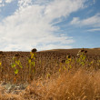 Beautiful panoramic photo of road through Sierra de Grazalema Natural Park. On the road. Blue cloudy sky. Sunflower fields. Amazing scenery. Andalusia. Spain. — Stock Photo #13131668