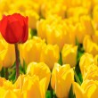 Yellow tulips and one red standing out of crowd. — Stock Photo #14285641