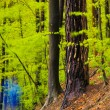 Forest landscape in spring after rain. — Stock Photo