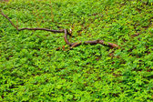 Forest tree branch with green foliage in spring after rain. — Stock Photo