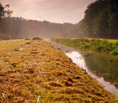 Louka s kanálem a stromy v mlze, za úsvitu. — Stock fotografie