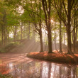 Forest in autumn with pond and mist with sunrays. - Stock Photo