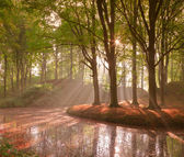 Forest in autumn with pond and mist with sunrays. — Stock Photo