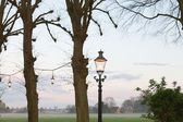Trees with lanterns at sunset with cloudy sky. — Stock Photo