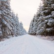 Beautiful snow winter landscape. — Stock Photo