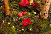 Kerstdecoratie. — Stockfoto