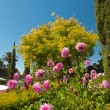 Beautiful botanical garden with green foliage and pink flowers a — Stock Photo