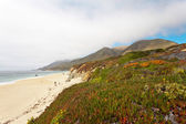 Coast of Big Sur with rocks and vegetation. California. USA. — Stock Photo