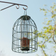 Bird feeding cage hanging in garden in spring time. — Stock Photo #25343509