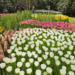 Botanical garden in spring. Keukenhof. Lisse. The Netherlands. — Stock Photo