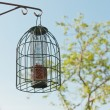 Bird feeding cage hanging in garden in spring time. — Stock Photo