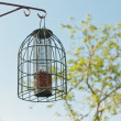 Bird feeding cage hanging in garden in spring time. — Stock Photo #25344037