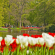 Red and white tulips in garden with tourists in the background. - Stock Photo