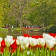 Stock Photo: Red and white tulips in garden with tourists in the background.