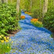 Bedding of blue bells in forest in spring. — Foto de Stock