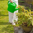 Senior woman giving plants water. Summer garden. — Stock Photo