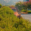 Old rusty pickup truck standing in winery landscape with blue sk — Stock Photo #25996101
