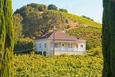 Vineyard with white house and blue sky. Napa Valley. California. — Stock Photo
