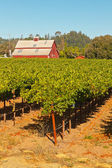 Vineyard with red barn and blue sky. Napa Valley. California. US — Foto de Stock
