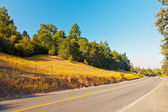 Road in hilly landscape with green trees and blue sky. Napa Vall — Stock Photo
