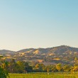 Vineyard with hills in the background. Blue sky. Napa Valley. Ca — Stock Photo