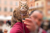 Cat in old italian city sitting on shoulder of the owner. — Стоковое фото