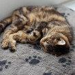 Stock Photo: Lazy tabby cat sleeping on grey rug.