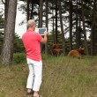 Senior retired man photographing scottish highlander cows with t — Stock Photo