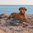 Street dog on the beach of Corfu in summer. Ionian island. Greec — Stock Photo