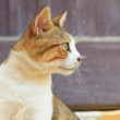 Street cat white with red spots. Corfu. Greece. — Stock Photo #31334279
