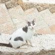 Street cat white with grey spots sitting on stairway. Corfu. Gre — Stock Photo