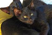 Two black street kittens sleeping on pillow outdoors. Corfu. Gre — Stock Photo