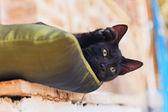 Playful curious black street kitten on pillow outdoors. Corfu. G — Stock Photo