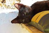 Sleepy curious black street kitten on pillow outdoors. Corfu. Gr — Stock Photo