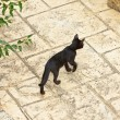 Street cat black kitten with green eyes. Corfu. Greece. — Stock Photo