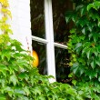 Wooden white window exterior surrounded by green leafs. Close-up — Stock Photo
