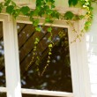 Wooden white window exterior surrounded by green leafs. Close-up — Stock Photo #33041323
