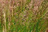 Close-up of pattern of long grass. — Stock Photo