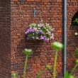 Basket with pink flowers hanging on brick wall. House and garden — Stock Photo