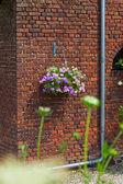 用挂在墙上的粉红色鲜花篮。房子和花园 — 图库照片