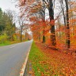 Autumn forest with road. Belgium. Ardennes. — Stock Photo #35744673