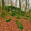 Stock Photo: Green mossy rocks and trees. Ground covered with autumn leafs. M
