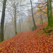 Autumn forest in the mist with autumn leafs on the ground. Belgi — Stock Photo