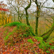 Green mossy rocks and trees. Ground covered with autumn leafs. M — Stock Photo #35745585
