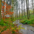Autumn forest with creek in mist. Belgium. Ardennes. Vresse — Stock Photo #35745605