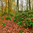 Green mossy rocks and trees. Ground covered with autumn leafs. M — Stock Photo