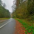 Autumn forest with road. Belgium. Ardennes. Vresse sur Semois. — Stock Photo #35746509