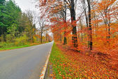 Autumn forest with road. Belgium. Ardennes. — Stock Photo